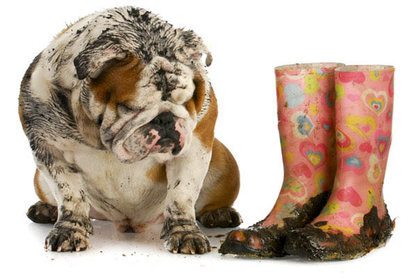 muddy carpet causes dog and rain boots